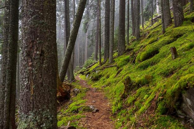 Сказочный тропический лес. деревья покрыты толстым слоем мха.