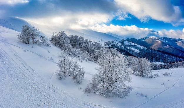 Сказочная заснеженная панорама елей, растущих на горных склонах зимой в пасмурную туманную погоду. концепция зимних видов спорта и горнолыжного курорта