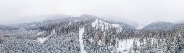 Сказочная заснеженная панорама елей, растущих на склонах гор зимой в пасмурную туманную погоду. концепция зимних видов спорта и горнолыжного курорта