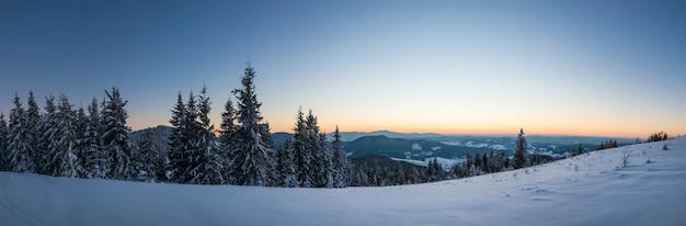 曇った霧の天気の冬に山の斜面に生えているトウヒの木の素晴らしい雪に覆われたパノラマ。