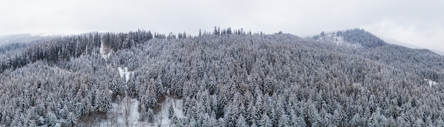 Fabulous snow-covered panorama of spruce trees growing on the mountain slopes in winter in cloudy foggy weather. winter sports and ski resort concept