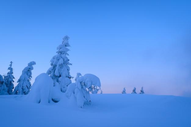 雪の中の素晴らしい冬の木。丘の上に森のある夕暮れの風景。コピースペース付きの青色で表示