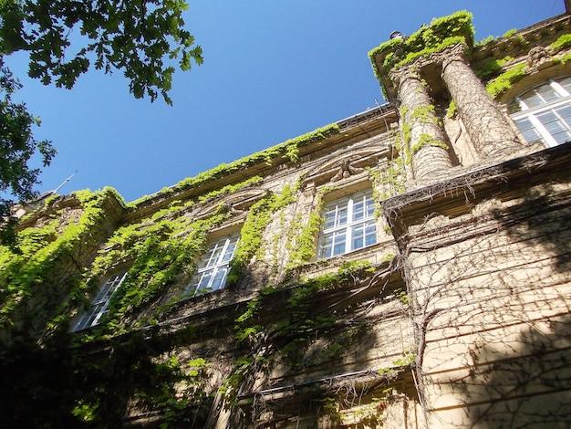 Фасад старого здания, оплетенный вьющимися зелеными растениями на фоне голубого неба