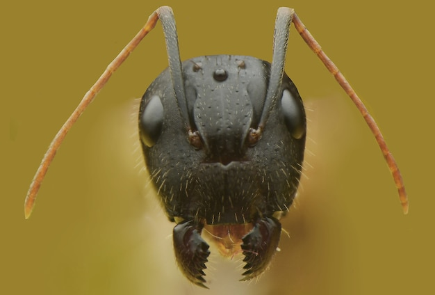 Face ant front view