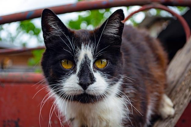 避難所の背景にある階段のホームレス猫の顔