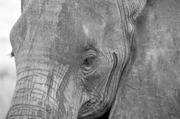 赤い象の顔を間近で撮影