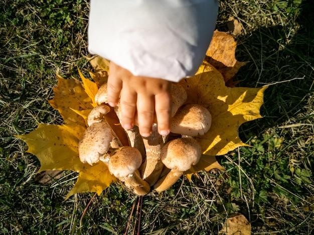 Безликий ребенок рукой коснуться опята в осеннем лесу крупным планом красивые съедобные грибы на