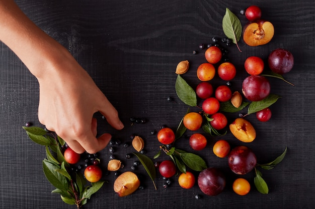 Faceless picture of fresh plums, aliches and blueberries decorated with green leaves and pits isolated over dark surface, woman's hand decoreting table with fruit and berries. vitamins on black table.
