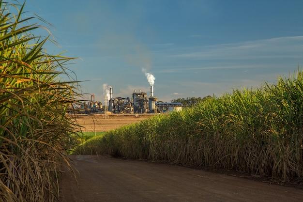 Factory sugar cane