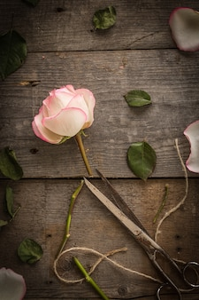 Faded pink rose on dark rustic  background