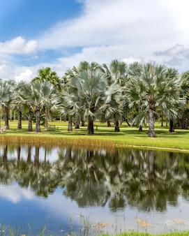 Fairchild тропический ботанический сад, майами, флорида, сша