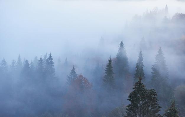 아침에 산 숲 풍경에 요정 일출.
