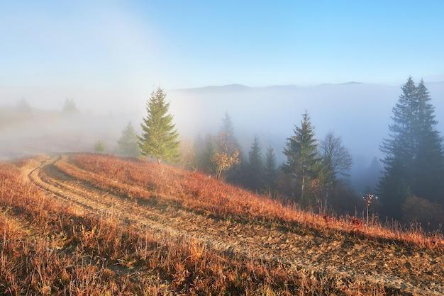 Сказочный восход солнца в пейзаже горного леса утром.