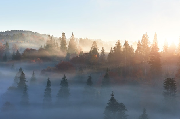Fairy sunrise in the mountain forest landscape in the morning.