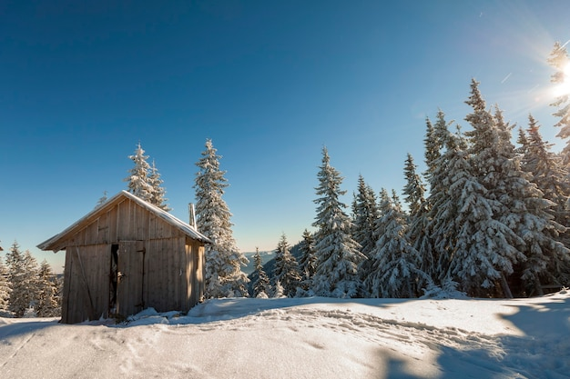 Fairy tale beautiful winter sunny landscape. wooden shepherd hut on mountain snowy clearing among tall pine trees on brightl blue sky copyspace background. happy new year and merry christmas card.