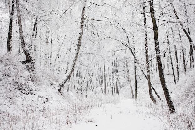 雪の中で妖精の冬の森。冬の時間です。豪雪。雪の中で木。美しい風景。木の幹と枝。