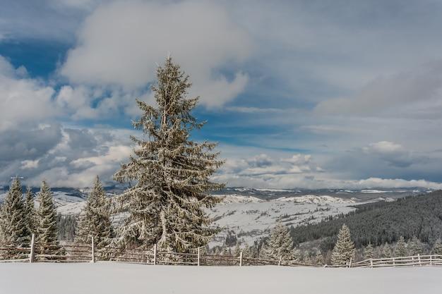 눈 덮인 전나무와 아름다운 푸른 하늘이있는 요정 겨울 숲