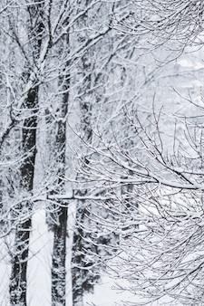 Сказочные пушистые заснеженные ветки деревьев, природа, пейзаж с белым снегом и холодным снегопадом