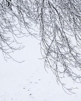 おとぎ話のふわふわの雪に覆われた木々は、白い雪と寒い天候の降雪で自然の風景を分岐します