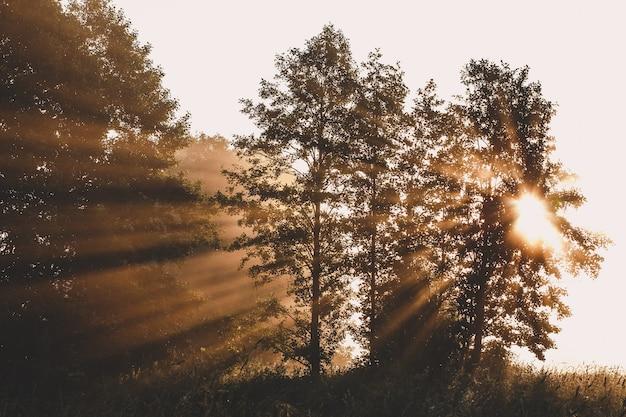 Сказочный лесной солнечный свет и тени утром
