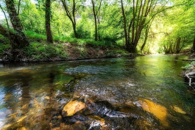 木々の間の小川と水の中の森の反射を伴う、緑と金の色調のおとぎ話の風景。デュラトン、セゴビア、スペイン、