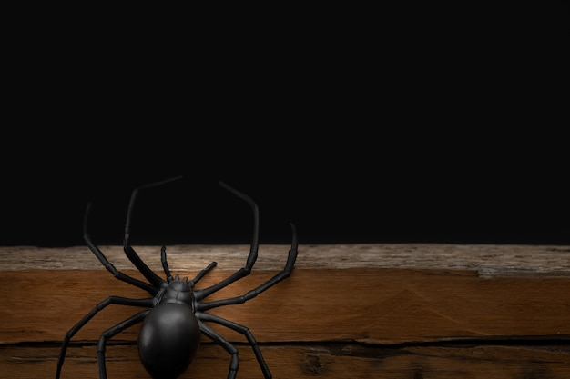 Fake rubber spider toy  on black background, halloween concept