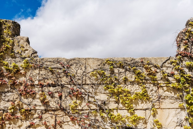 Fake stone wall covered with vegetation vines and blue sky with clouds