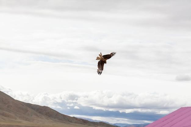 Сокол пролетает над крышами домов небольшого поселения в горах монголии.