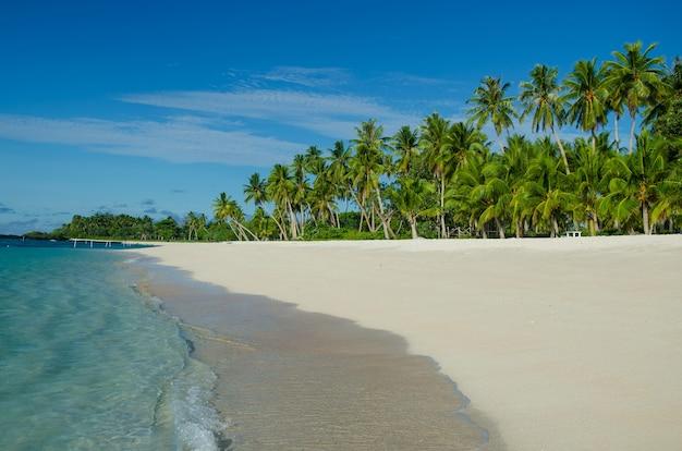 Пляж фалеалупо в окружении моря и пальм под солнечным светом на самоа
