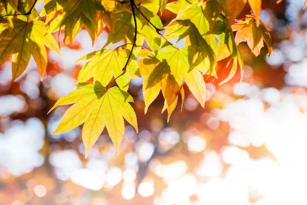 秋と秋のシーズンコンセプト、スカイショットの上を見て