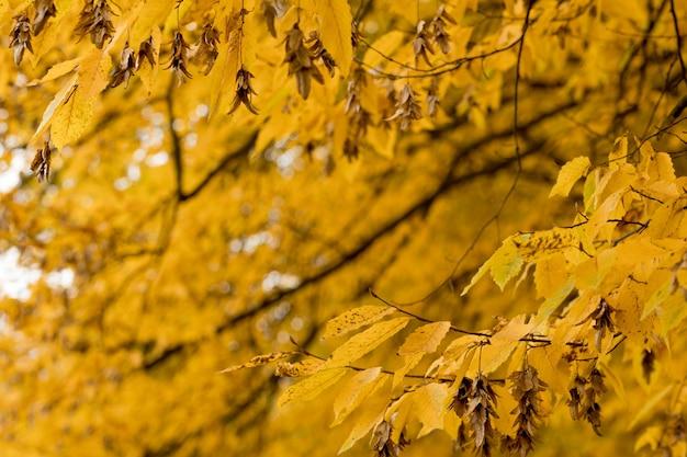 Осень, осень, листья. ветвь дерева с осенними листьями на размытой природе. пейзаж в осенний сезон.