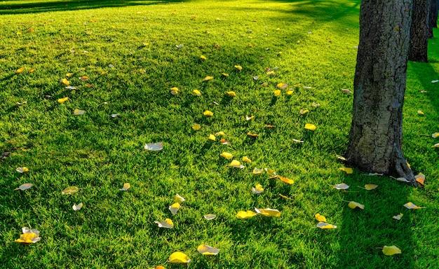 Осень осень парк осенние деревья и листья