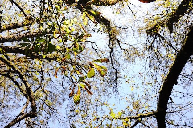 Fall, autumn, tree, arms, sky