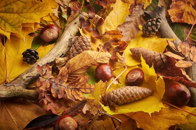 다른 노란 잎, 호르스 밤나무, 가문비나무, 소나무 콘이 있는 가을 배경. 가을 시즌.