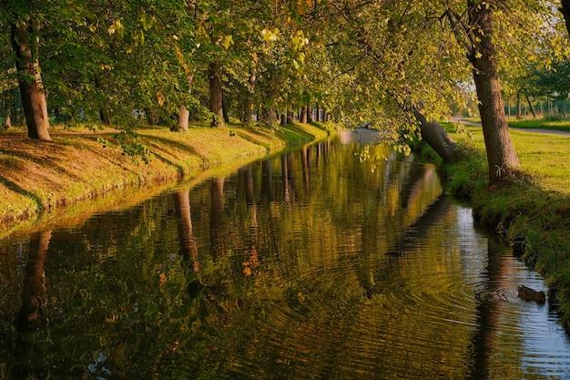 古いリンデンに囲まれた公園の秋、穏やかな川。秋の暖かい夜、アヒルは池で泳ぎ、選択的な焦点、都市公園を散歩します