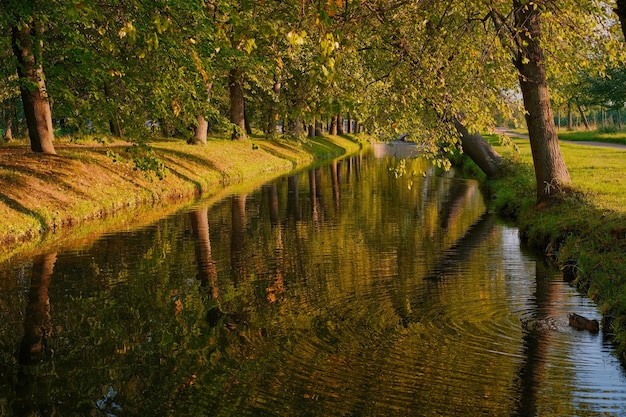 Autunno, fiume calmo nel parco circondato da vecchi tigli. serata calda autunnale, anatre nuotano nello stagno, messa a fuoco selettiva, passeggiate nel parco cittadino