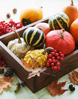 Fall composition with multi color pumpkins on rustic background