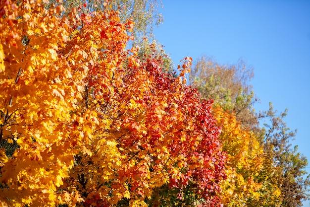 Осенняя листва на деревьях в парке
