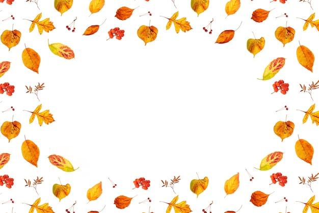 Падение кадра из натуральных осенних листьев и ягод на белом фоне с копией пространства, как фон или текстуры. вид сверху заложить квартиру.