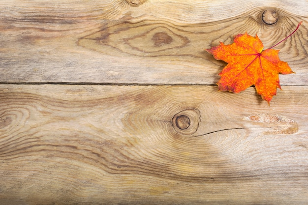 Fall greeting background with orange fall maple leaf,