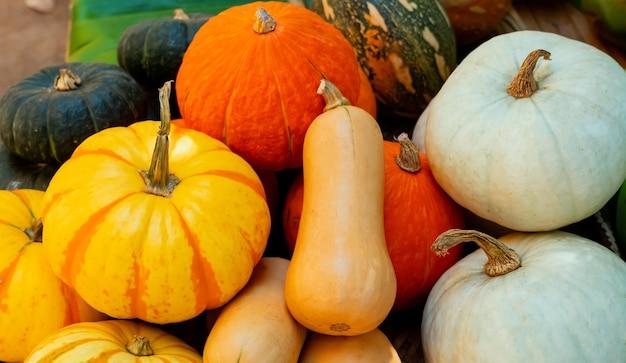 秋の収穫の宝庫。果物と野菜の秋の季節。感謝祭の日のコンセプト。