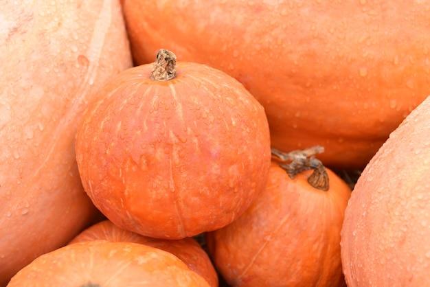 秋の収穫の宝庫。秋のカボチャ。感謝祭やハロウィンデコレーションイベントに。