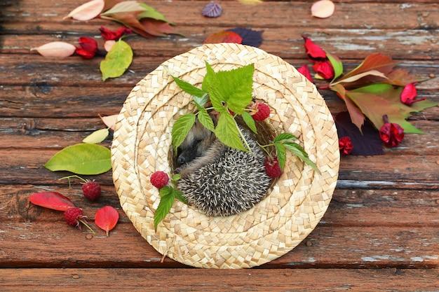 Fall hedgehog hat autumn leaves raspberries old wooden table