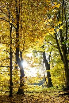 공원에서 가을. 아름 다운가 숲 풍경입니다. 따뜻한 날씨
