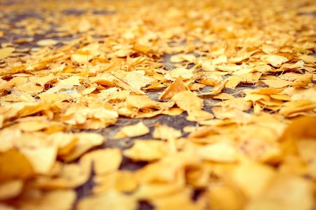 Падение в городе. сухие опавшие осенние листья березы на асфальте в городском парке