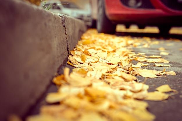 Падение в городе. сухие опавшие осенние березовые листья на асфальте у бордюра в городском парке