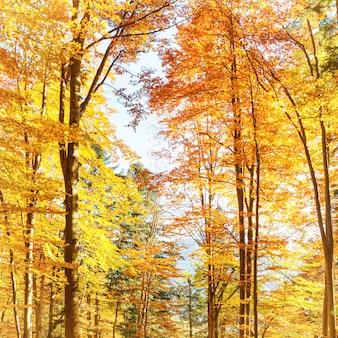 숲에 빠지다. 붉은 잎을 가진 오렌지 나무