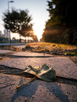 Fall leaf on concrete with sunrise background