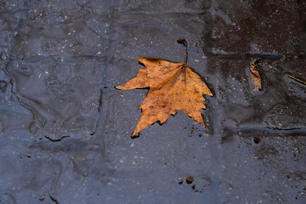 水に浮かぶ秋の葉秋の葉雨の天気の自然の背景に秋の季節の葉