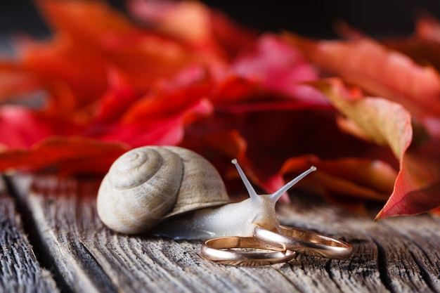 Fall on leaves on weathered table with wedding rings and snail